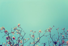 Leafless Tree Branch With Pink Flowers Against Blue Sky Backgrou