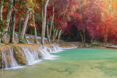 Photo sur Aluminium Olive Waterfall in rain forest (Tad Sae Waterfalls at Luang prabang, L