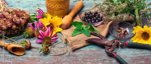 Set of medicinal herbs Canvas Print