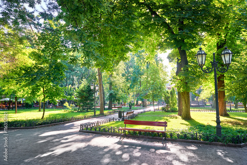 Fototapeta morning in city park, bright sunlight and shadows, summer season, beautiful landscape obraz