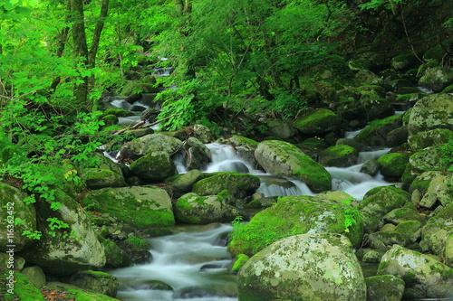 Aluminium Prints Forest river 夏の藤沢渓流