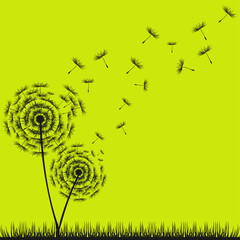 NaklejkaDandelion Seeds