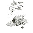 Vector set of summer harvest. Decorated with banner, and blots. Blueberry or cranberry or blackberry and mint leaves.