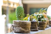Cactus In Sack Bag.
