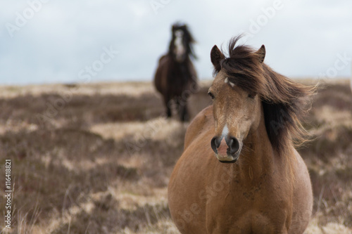 Fotografie, Obraz  Wild Horses