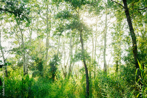 Wall Murals Forest green trees in summer Sunny day in the forest
