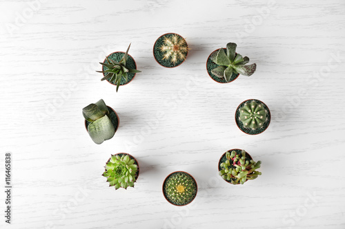 Fotografering  Different succulents and cactus in pots on light wooden background
