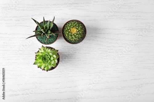Poster Fleur Different succulents and cactus in pots on light wooden background