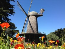 Dutch Windmill With Tulips In San Francisco