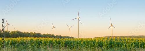 Fotografie, Obraz  Windpark und Maisfeld in Österreich