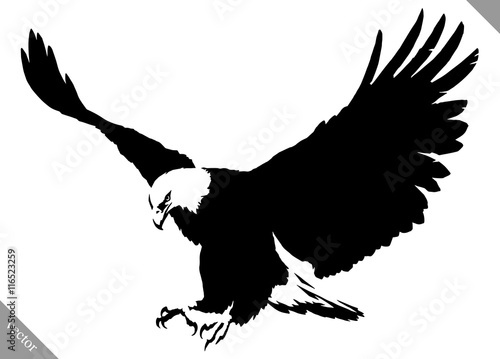Fotografie, Obraz black and white paint draw eagle bird vector illustration