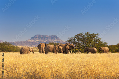Fotografía  Herd of Elephants in Sossusvlei, Namibia