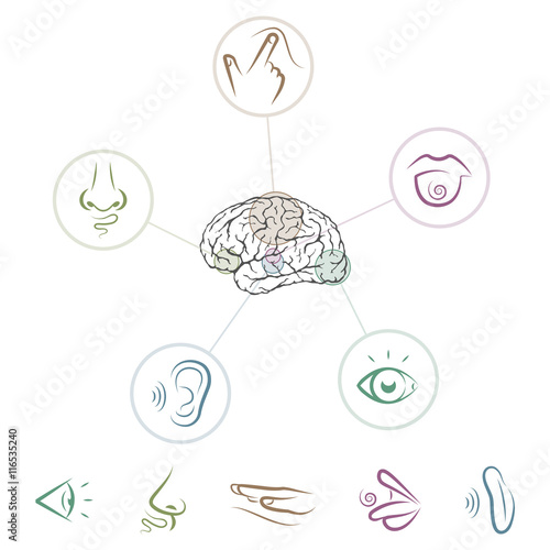 Foto  Five senses located in brain