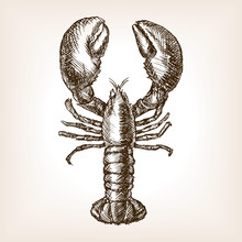 Lobster Hand Drawn Sketch Style Vector