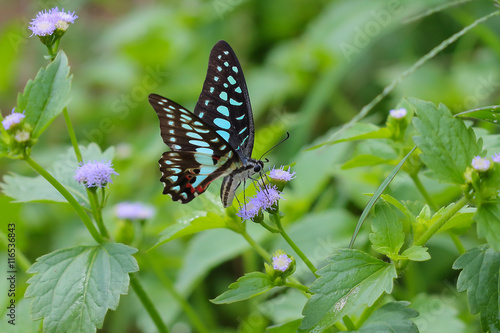 Fotografie, Obraz  Beautiful butterfly