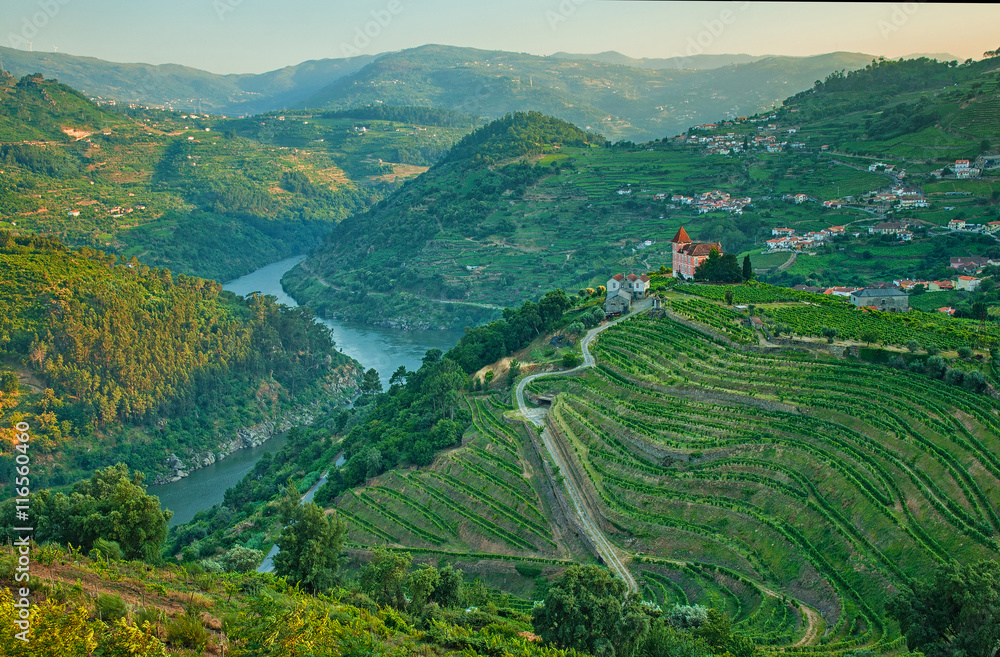 Fototapety, obrazy: Vineyard hills in the river Douro valley, Portugal