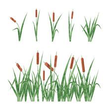 Watercolor Reeds Set. Design E...