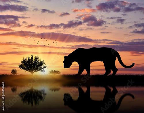 Poster Olifant Jaguar wild animal hunts at sunset