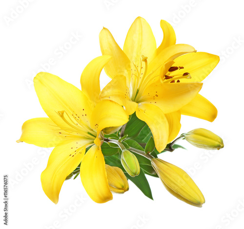 Fotobehang Narcis Beautiful lilies isolated on white