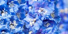 Blue Flowers Of A Delphinium C...