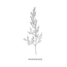 Wormwood Hand Drawn Realistic Sketch