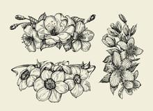 Flower. Hand Drawn Sketch Tutsan, Hypericum, Narcissus, Cherry Flowers. Vector Illustration