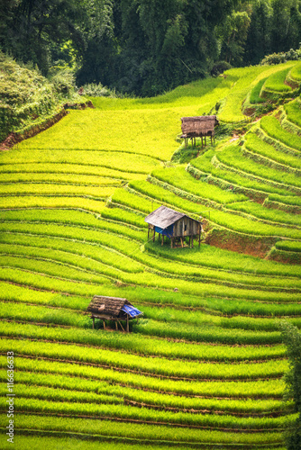 Poster Rijstvelden beautiful landscape view of rice terraces and house