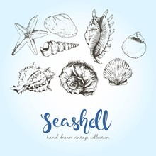 Vector Set Of Engraved Seashells. Hand Drawn Wintage Style Summer Illustration.