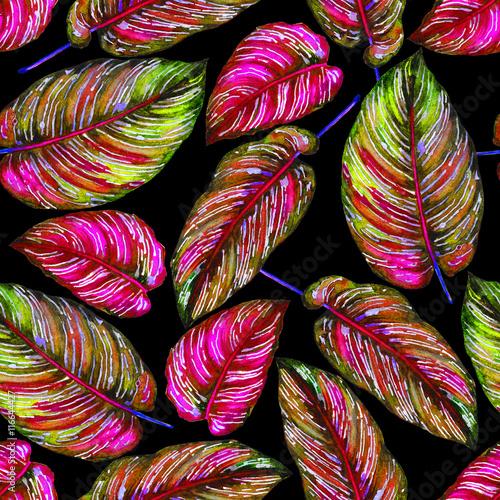 wzor-tropikalny-lisci-kolorowi-liscie-egzotyczna-calathea-ornata-roslina-na