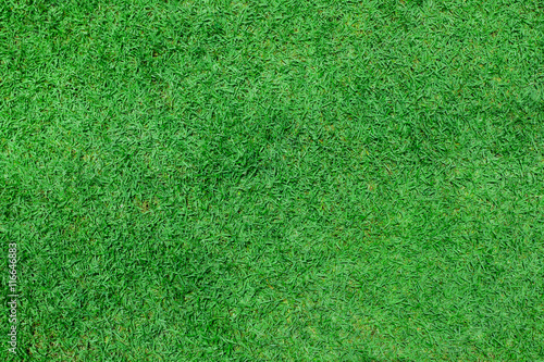 Deurstickers Gras green grass. natural background texture. fresh spring green gras