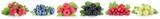 Sammlung Beeren Erdbeeren Blaubeeren Himbeeren Johannisbeeren Fr
