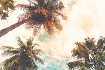 FototapetaLandscape nature background of shore tropic. Coconut palm trees at seaside tropical coast, vintage effect filter and stylized