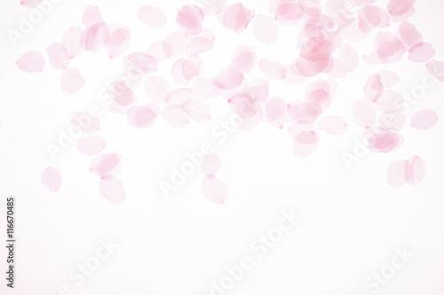 Foto op Plexiglas Kersen 桜の花びら