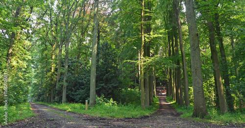 Tuinposter Weg in bos Deux chemins