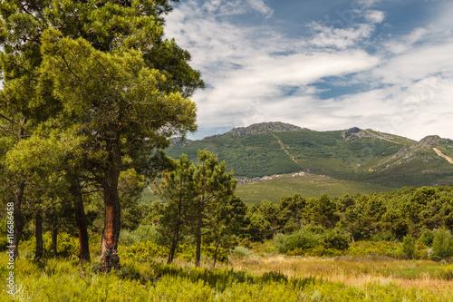 Pinar de Tabuyo del Monte y Montes de León. © LFRabanedo