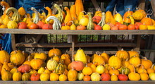 Pumpkins And Gourds Of Various...