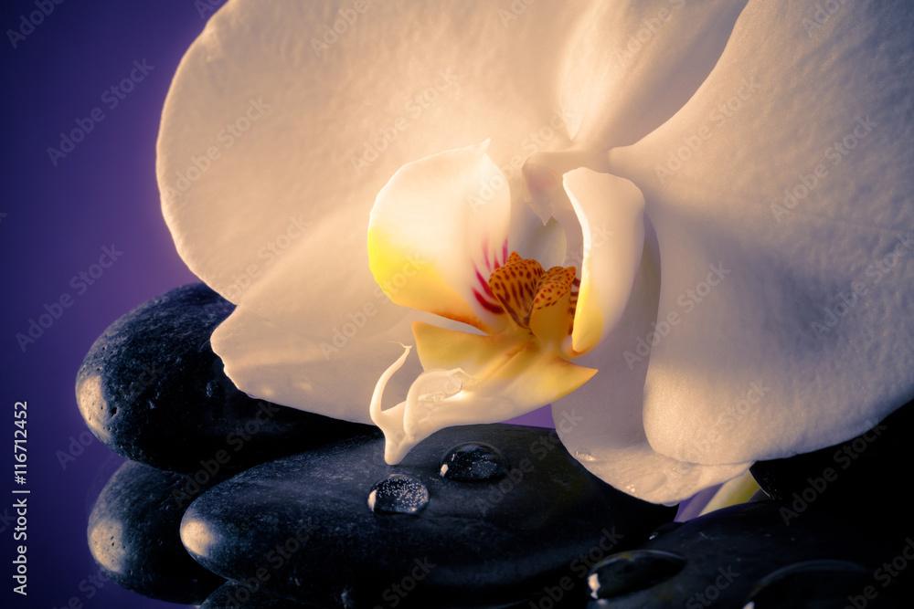 Fotografía  Orchidea Bianca delicata