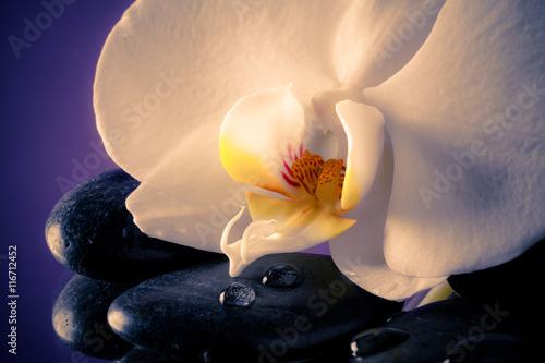 Photo  Orchidea bianca delicata