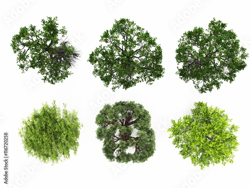 Fotografija  tree isolated white background collage