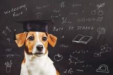 Smart Dog Sitting Near Blackboard.