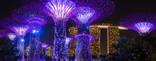 Night View Of Illuminated Supertree Grove At Gardens By The Bay In Singapore
