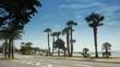 Palm tree boulevard, Cote D'Azur France