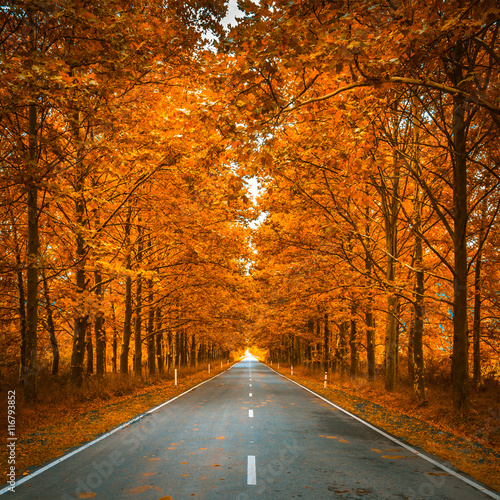 fototapeta na drzwi i meble road in autumn woods