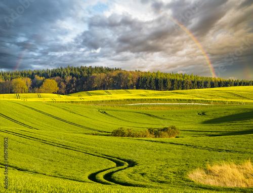 Fototapeta panorama wiosennego pola  obraz