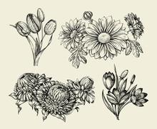 Flowers. Hand Drawn Sketch Flower, Tulip, Astra, Aster, Crocus, Chrysanthemum. Vector Illustration