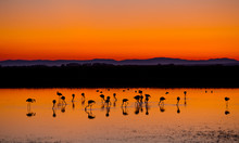 Beautiful Sunset With Flamingos Silhouettes