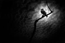 Raven, Death Valley