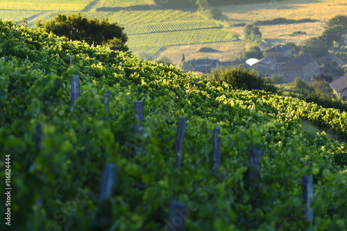 Papiers peints Vignoble Morning lights and colors over vineyards of Beaujolais, France