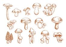 Edible Mushrooms Sketches For Food Design