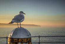 Whitby Seagull Seascape In Yor...